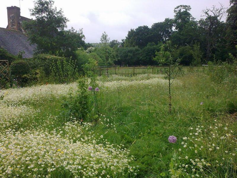 DMW Landscapes Contemporary Garden Meadow 1
