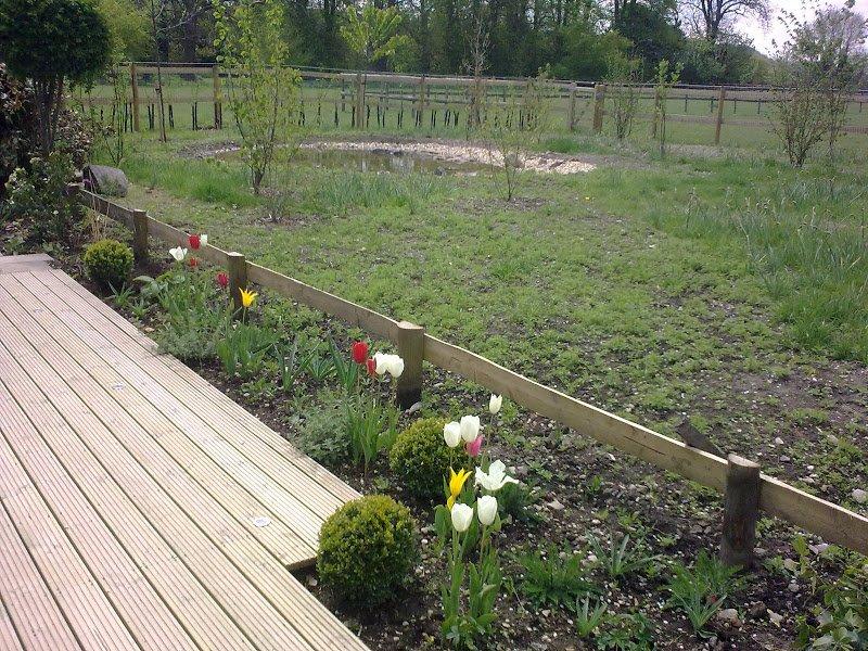 DMW Landscapes Contemporary Garden Meadow 19