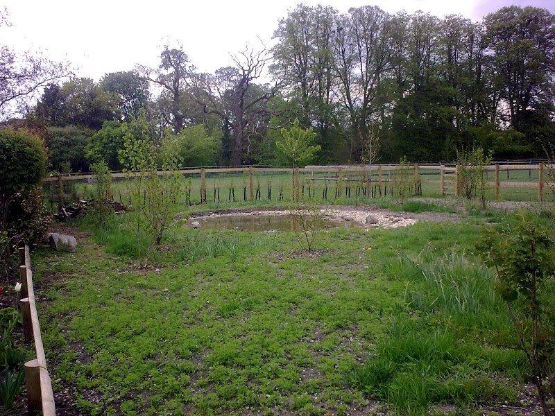 DMW Landscapes Contemporary Garden Meadow 20