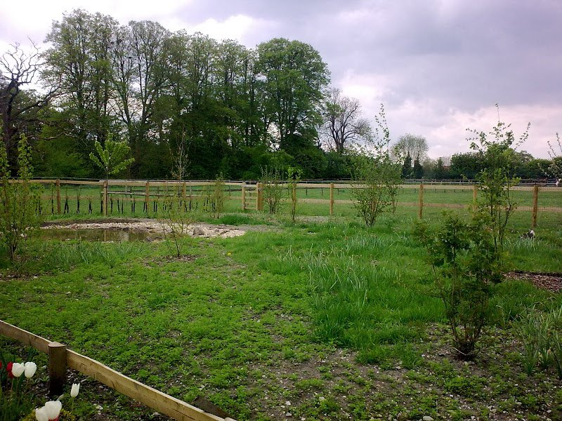 DMW Landscapes Contemporary Garden Meadow 21