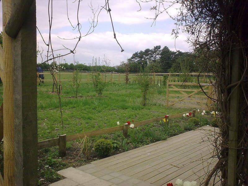DMW Landscapes Contemporary Garden Meadow 23
