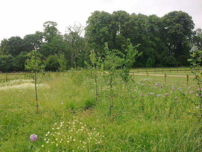 DMW Landscapes Contemporary Garden Meadow 3