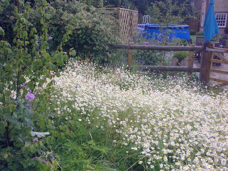 DMW Landscapes Contemporary Garden Meadow 4