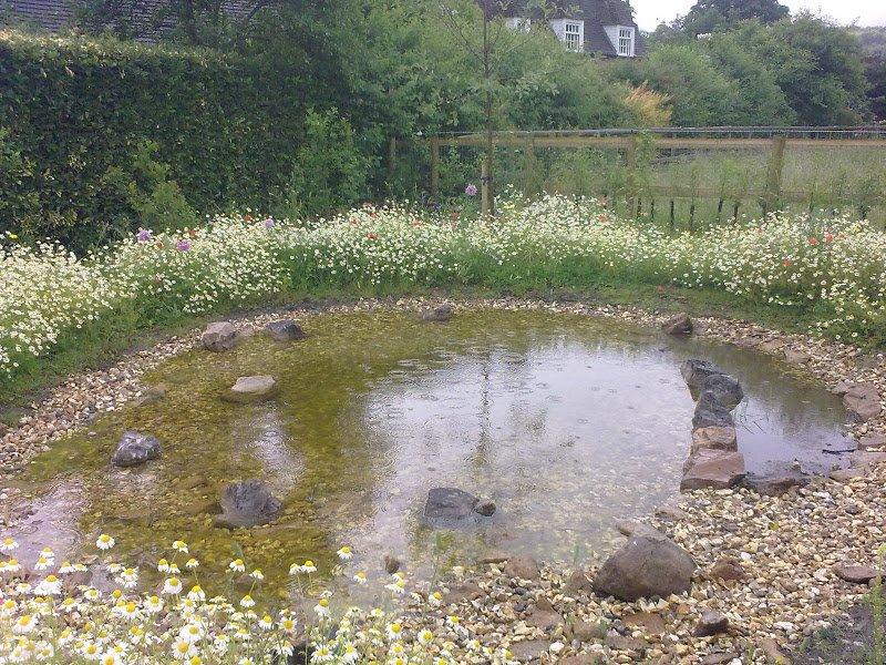 DMW Landscapes Contemporary Garden Meadow 5