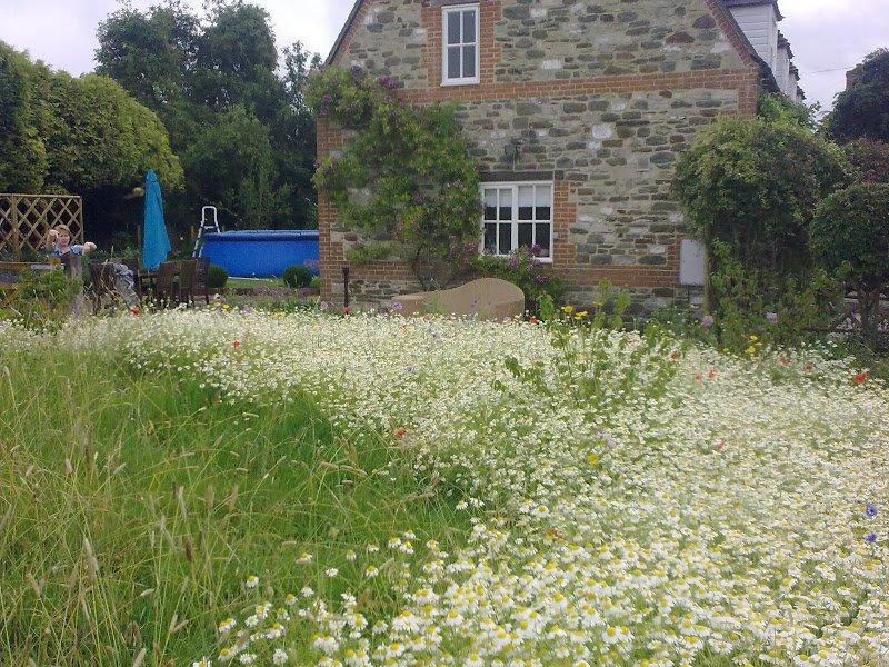 DMW Landscapes Contemporary Garden Meadow 6