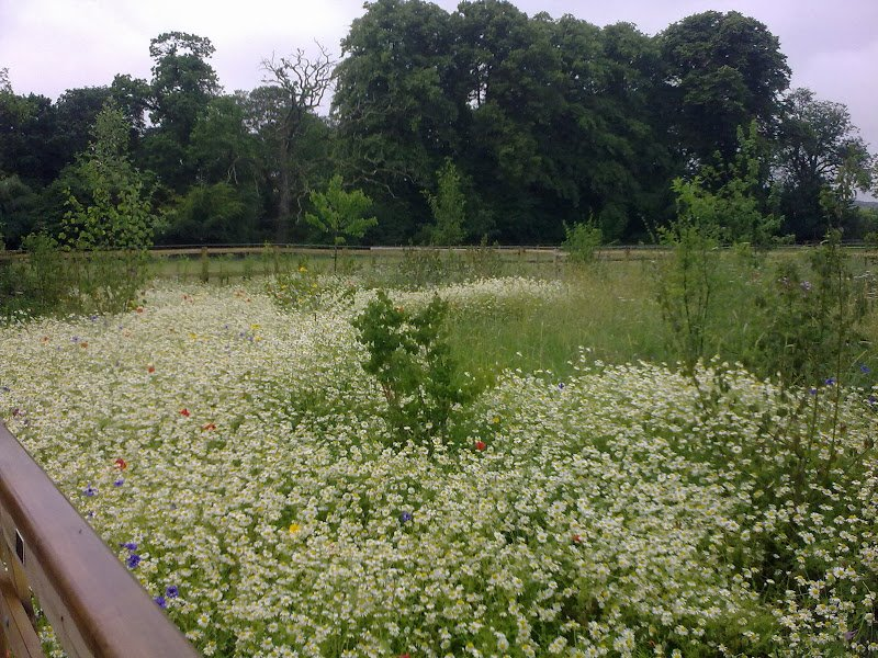 DMW Landscapes Contemporary Garden Meadow 7