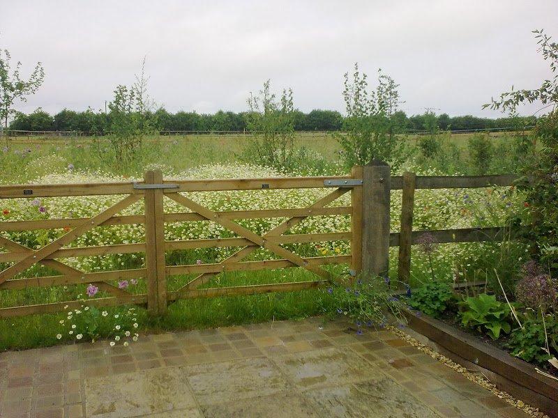 DMW Landscapes Contemporary Garden Meadow 9
