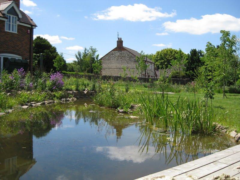 DMW Landscapes Wildlife Ponds Faringdon 5 1