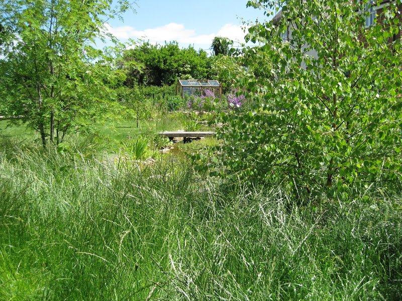 DMW Landscapes Wildlife Ponds Faringdon 6 1