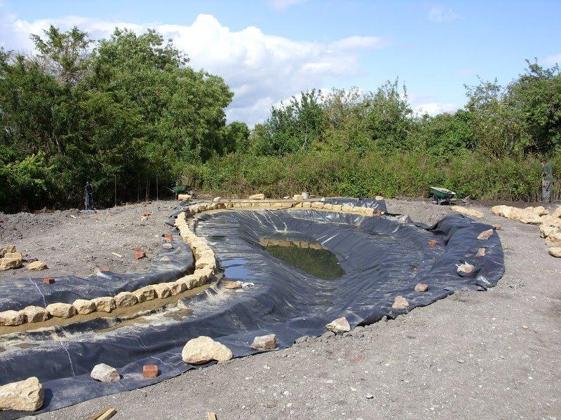 DMW Landscapes Wildlife Ponds Faringdon 7 1