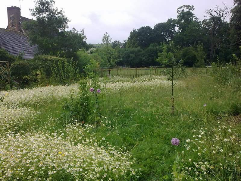 DMW Landscapes Contemporary Garden Meadow 1