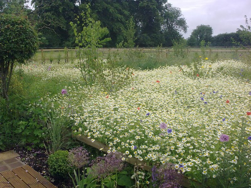 DMW Landscapes Contemporary Garden Meadow 17