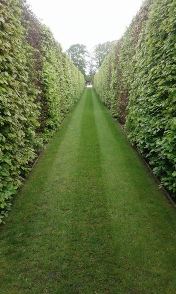 DMW Landscapes Local Garden Maintenance Service Oxfordshire 39
